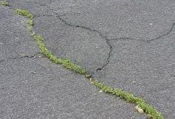 Weeds breaking through a tarmacadam surface